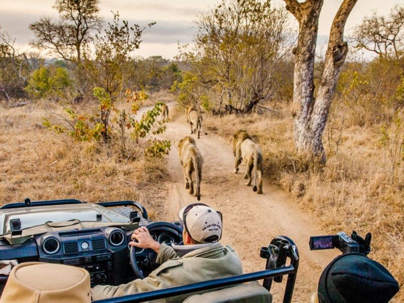 Safari Holidays Are Made Better With Swarovski Optics