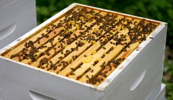 Top 10 Fascinating Facts about Bees