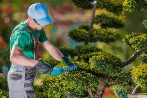 How To Choose a Landscape Gardener