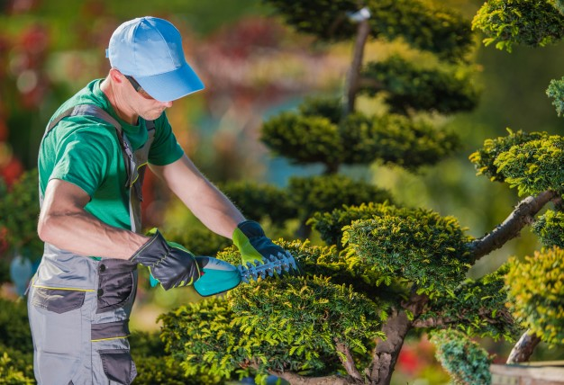 How To Choose a Landscape Gardener