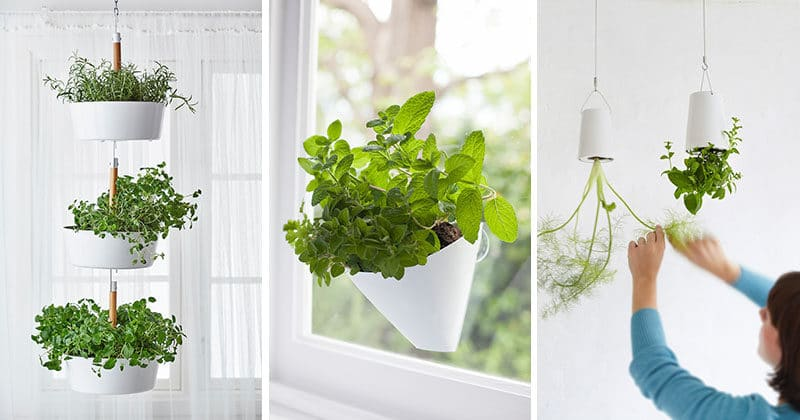 Small Indoor Hanging Baskets